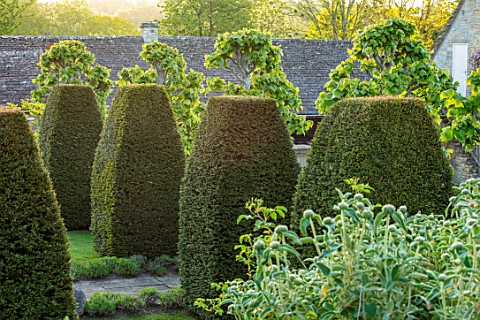 VILLAGE_FARM_HOUSE_GLOUCESTERSHIRE_CLIPPED_YEW_TAXUS_TOPIARY_IN_FRONT_GARDEN_MAY_SPRING_GREEN_COUNTR