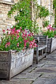 VILLAGE FARM HOUSE, GLOUCESTERSHIRE: WALL, MAY, SPRING, BLOOMING, FLOWERING, BULBS, WALLFLOWERS, WOODEN CONTAINERS, TULIPA ANGELIQUE, ERYSIMUM CHEIRI RUBY GEM, BENCHES, SEATS