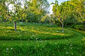 VILLAGE FARM HOUSE, GLOUCESTERSHIRE: MEADOW, SPRING, MAY, ORCHARD, FRUIT, TREES, PATH, GRASS, BUTTERCUPS, RANUNCULUS REPENS