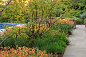 DESIGNER JAMES SCOTT, THE GARDEN COMPANY: POOL TERRACE, RAISED BEDS, CORTEN STEEL EDGING, EDGES, BEDS, PRUNUS SERRULA, GEUM TOTALLY TANGERINE, ERIGERON KARVINSKIANUS