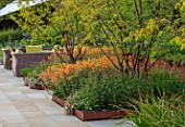 DESIGNER JAMES SCOTT, THE GARDEN COMPANY: TERRACE, RAISED BEDS, CORTEN STEEL EDGING, EDGES, BEDS, PRUNUS SERRULA, GEUM TOTALLY TANGERINE, ERIGERON KARVINSKIANUS