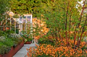 DESIGNER JAMES SCOTT, THE GARDEN COMPANY: TERRACE, RAISED BEDS, CORTEN STEEL EDGING, EDGES, BEDS, PRUNUS SERRULA, GEUM TOTALLY TANGERINE, GREENHOUSE