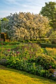 PETTIFERS, OXFORDSHIRE: DESIGNER GINA PRICE: SPRING, MAY, BORDER WITH ALLIUMS, WHITE FLOWERING BLOSSOMS, FLOWERS OF MALUS HUPEHENSIS