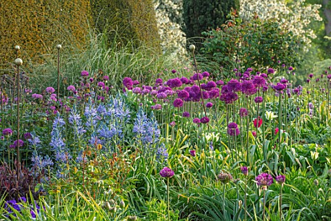 PETTIFERS_OXFORDSHIRE_DESIGNER_GINA_PRICE_BORDER_SPRING_MAY_YEW_TOPIARY_YEW_HEDGES_HEDGING_CAMASSIA_