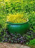 PETTIFERS, OXFORDSHIRE: DESIGNER GINA PRICE: GREEN GLAZED CONTAINER PLANTED WITH YELLOW FLOWERS OF HAKONECHLOA MACRA ALBOAUREA, GRASSES