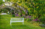 THE MANOR HOUSE, STEVINGTON, BEDFORDSHIRE: MAY, SPRING, WHITE BENCH, SEAT, LABURNUM VOSSII, ARCH, ALLIUM PURPLE SENSATION, ARCHWAY, TUNNEL, AVENUE, YELLOW, FLOWERING, CLIMBERS