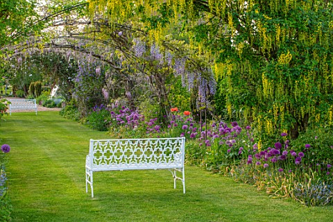 THE_MANOR_HOUSE_STEVINGTON_BEDFORDSHIRE_MAY_SPRING_WHITE_BENCH_SEAT_WISTERIA_LABURNUM_VOSSII_ARCH_AL