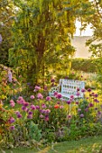 THE MANOR HOUSE, STEVINGTON, BEDFORDSHIRE: SPRING, MAY, EARLY MORNING, SUNRISE, WHITE METAL BENCH, SEATS, LABURNUM VOSSII, ARCH, ARCHWAY, ALLIUM PURPLE SENSATION, POPPIES
