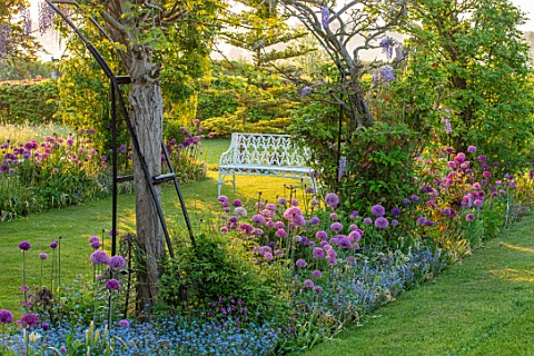 THE_MANOR_HOUSE_STEVINGTON_BEDFORDSHIRE_SPRING_MAY_EARLY_MORNING_LABURNUM_VOSSII_ARCH_ARCHWAY_ALLIUM