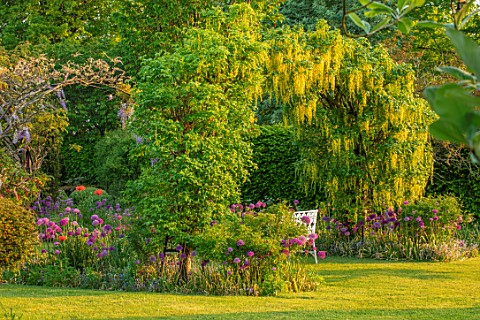 THE_MANOR_HOUSE_STEVINGTON_BEDFORDSHIRE_SPRING_MAY_EARLY_MORNING_SUNRISE_LABURNUM_VOSSII_ARCH_ARCHWA