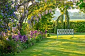 THE MANOR HOUSE, STEVINGTON, BEDFORDSHIRE: SPRING, MAY, LABURNUM VOSSII, ARCHWAY, ALLIUM PURPLE SENSATION, POPPIES, WISTERIA, SUNRISE, METAL, WHITE, SEAT, BENCH, SOLANUM GLASNEVIN