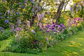 THE MANOR HOUSE, STEVINGTON, BEDFORDSHIRE: SPRING, MAY, LABURNUM ARCH, ARCHWAY, ALLIUM PURPLE SENSATION, POPPIES, WISTERIA ROSEA, SOLANUM GLASNEVIN