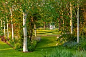 THEMANOR HOUSE, STEVINGTON, BEDFORDSHIRE: VIEW THROUGH BIRCH AVENUE TO BLUE SEAT, ARBOUR, PATH, BIRCHES