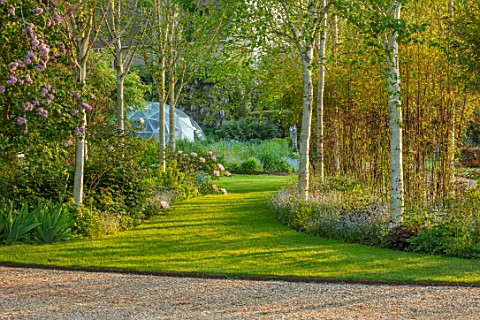 THEMANOR_HOUSE_STEVINGTON_BEDFORDSHIRE_VIEW_TO_GEODESIC_DOME_THROUGH_BIRCH_AVENUE_GREENHOUSE_LAWN_GR