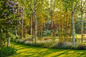 THEMANOR HOUSE, STEVINGTON, BEDFORDSHIRE: BIRCH AVENUE, BETULA, BAMBOOS, MAY, SPRING, GRASS, PATHS
