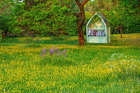 THE_MANOR_HOUSE_STEVINGTON_BEDFORDSHIRE_BUTTERCUPS_GREEN_COVERED_SEAT_ARBOUR_CAMASSIAS_WILDFLOWER_ME