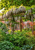 MORTON HALL GARDENS, WORCESTERSHIRE: WOODEN PERGOLA, SPRING, MAY, WSIERIA BRACHYBOTRYS SHIRO-KAPITAN, ROSA GALLICA, SPRING, MAY
