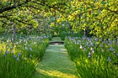 BRYANS GROUND, HEREFORDSHIRE: THE ORCHARD IN LATE SPRING WITH APPLE TREES AND BLUE FLOWERS OF IRIS SIBIRICA PAPILLON - SPRING, COUNTRY GARDEN, FLOWERING, GRASS, WATER, POOL, CANAL