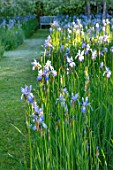 BRYANS GROUND, HEREFORDSHIRE: THE ORCHARD IN LATE SPRING WITH APPLE TREES AND BLUE FLOWERS OF IRIS SIBIRICA PAPILLON - SPRING, COUNTRY GARDEN, FLOWERING, GRASS, WOODEN, BENCH
