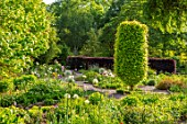 THE PICTON GARDEN AND OLD COURT NURSERIES, WORCESTERSHIRE: ALLIUMS IN MAY, BULBS, SPRING, GREEN, BORDERS