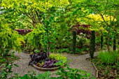 THE PICTON GARDEN, OLD COURT NURSERIES, WORCESTERSHIRE: MAY, SHRUBS, TREES, FOLIAGE, LEAVES, BERBERIS HELMAND PILLAR, LIRIODENDRON TULIPIFERA FASTIGIATA, TETRADIUM DANIELLII