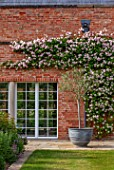MORTON HALL GARDENS, WORCESTERSHIRE: SOUTH GARDEN, PINK FLOWERS OF CLIMBING ROSE - ROSA CECILE BRUNNER, ROSES, CLIMBERS, WALLS, MAY