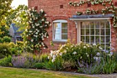 MORTON HALL GARDENS, WORCESTERSHIRE: BORDERS, SPRING, MAY, IRIS MESMERIZER, ROSA CLARENCE HOUSE, ROSA CREME DE LA CREME, WALLS, WHITE, FLOWERS, FLOWERING, BLOOMING