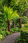 YORK GATE, YORKSHIRE: TROPICAL GARDEN, JUNE, SUMMER, DICKSONIA ANTARCTICA, BORDERS, GREEN, FOLIAGE, LEAVES, PATHS