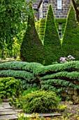 YORK GATE, YORKSHIRE: ESPALIERED CEDAR TRAINED AGAINST WALL, CLIPPED, TOPIARY, YEW, TAXUS HEDGES, HEDGING, JUNE, SUMMER, GREEN