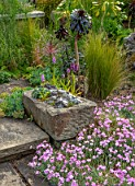 YORK GATE, YORKSHIRE: THE PAVED GARDEN, JUNE, SUMMER, DIANTHUS, AEONIUM ZWARTKOP, ALPINE SINK, CONTAINER, ALLIUM SCHUBERTII, ORCHIDS, ALPINES
