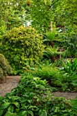 YORK GATE, YORKSHIRE: DELL GARDEN, JUNE, SUMMER, GREEN, FOLIAGE, LEAVES, STREAM, RODGERSIAS, ASTILBES, VERATRUM, TREE FERNS, DICKSONIA ANTARCTICA