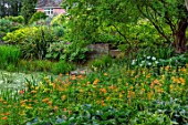 FULLERS MILL GARDEN, SUFFOLK: PERENNIAL, THE MILL POND, SUMMER, JUNE, POOL, WATER, CANDELABRA PRIMULAS, ZANTEDESCHIA AETHIOPICA, FULLERS MILL COTTAGE
