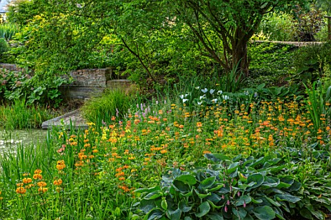 FULLERS_MILL_GARDEN_SUFFOLK_PERENNIAL_THE_MILL_POND_SUMMER_JUNE_POOL_WATER_CANDELABRA_PRIMULAS_ZANTE