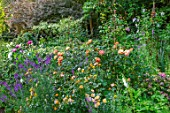 ASHCOMBE, SURREY: COTTAGE GARDEN, SUMMER, BORDERS, LAWN, ROSES, ROSA LADY OF SHALLOT