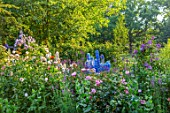 ASHCOMBE, SURREY: COTTAGE GARDEN, SUMMER, ROSES, JUNE, BORDERS, DELPHINIUM LOCH LEVIN, BLUE DAWN, SANDPIPER, MOONBEAM, CLEMATIS EMILIA PLATER, POPPIES, ROSA FOR YOUR EYES ONLY
