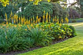 ELMONT HOUSE, SUSSEX - DESIGN ANTHONY PAUL - YELLOW, ORANGE FLOWERS OF LIGULARIA ZEPTER, AGM, SUMMER, PERENNIALS