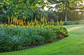 ELMONT HOUSE, SUSSEX - DESIGN ANTHONY PAUL - YELLOW, ORANGE FLOWERS OF LIGULARIA ZEPTER, AGM, SUMMER, PERENNIALS, LAWN