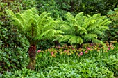 BELMONT HOUSE, SUSSEX - DESIGN ANTHONY PAUL - SHADE, SHADY, TREE FERNS, HEMEROCALLIS, GREEN, BORDERS, DICKSONIA ANTARCTICA, TREES