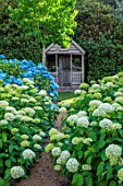 BELMONT HOUSE, SUSSEX - DESIGN ANTHONY PAUL: SUNDIAL, HYDRANGEA ARBORESCENS ANNABELLE, WHITE FLOWERS, FLOWERING, SHRUBS, BLOOMS, BLOOMING, WOODEN SUMMERHOUSE, SHADE, SHADY