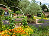 ALDERWOOD HOUSE, KENT: VEGETABLE, KITCHEN GARDEN, POTAGER, OLIVE TREE, DERBYSHIRE STONE, LAVANDULA GROSSO, RUNNER BEANS, ARCHES, FRENCH MARIGOLDS, CALENDULA OFFICINALIS