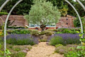 ALDERWOOD HOUSE, KENT: VEGETABLE, KITCHEN GARDEN, POTAGER, OLIVE TREE, DERBYSHIRE STONE, LAVANDULA GROSSO, ARCHES, GREENHOUSE, GRAVEL, PATHS