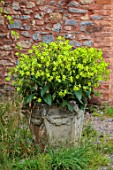 SILVER STREET FARM, DEVON. DESIGNER ALASDAIR CAMERON - STONE CONTAINER IN COURTYARD PLANTED WITH NICOTIANA ALATA LIME GREEN, ANNUALS