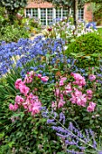MORTON HALL GARDENS, WORCESTERSHIRE: SOUTH GARDEN, BORDERS, BLUE FLOWERS OF AGAPANTHUS NORTHERN STAR, ROSES, ROSA BLUSH CHINA, PEROVSKIA BLUE SPIRE, FOUNTAIN