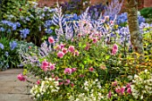 MORTON HALL GARDENS, WORCESTERSHIRE: SOUTH GARDEN, BORDERS, WHITE FLOWERS OF AGAPANTHUS POLAR STAR, PEROVSKIA BLUE SPIRE, ROSES, ROSA OLD BLUSH CHINA, AGAPANTHUS NORTHERN STAR