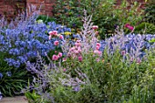MORTON HALL GARDENS, WORCESTERSHIRE: SOUTH GARDEN, BORDERS, BLUE FLOWERS OF PEROVSKIA BLUE SPIRE, ROSES, ROSA OLD BLUSH CHINA, AGAPANTHUS NORTHERN STAR
