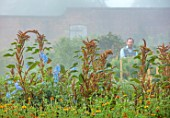 THE FLOWER GARDEN AT STOKESAY COURT - BARNEY MARTIN IN WALLED GARDEN WITH AMARANTHUS HOT BISCUITS AND DELPHINIUM BLUE FOUNTAIN, MIST, FOG, SEPTEMBER, CUTTING, FLOWERS, BLOOMS