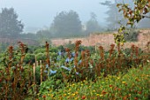 THE FLOWER GARDEN AT STOKESAY COURT - WALLED GARDEN WITH AMARANTHUS HOT BISCUITS AND DELPHINIUM BLUE FOUNTAIN, MIST, FOG, SEPTEMBER, CUTTING, FLOWERS, BLOOMS