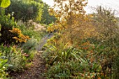 THE DOWER HOUSE, DERBYSHIRE: PATH, PHORMIUM, HELENIUM MOERHEIM BEAUTY, GRASSES