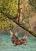 BABYLON FLOWERS, OXFORDSHIRE - APPLE TREE WITH MISTLETOE VISCUM ALBUM, NATURAL COPPER WIRE WREATH, GRASSES, TEASELS, PINE CONES, LOTUS FLOWER, FERNS, HYDRANGEA, PHEASANT FEATHERS